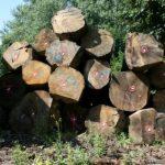 FSC® hout