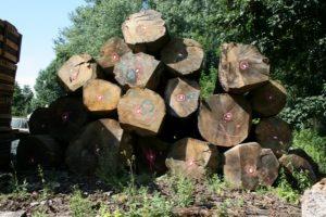 FSC hout